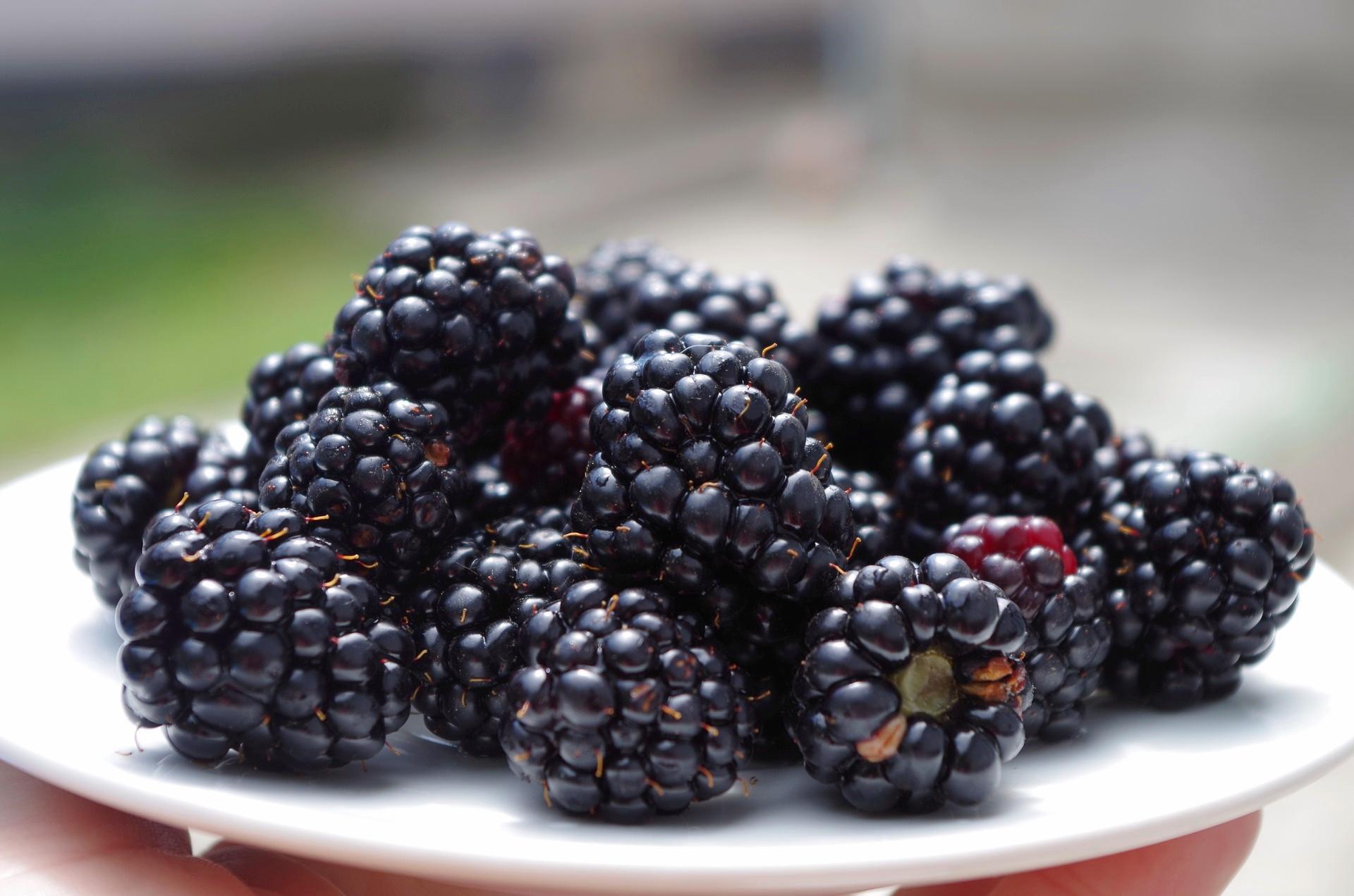 Blackberries EA