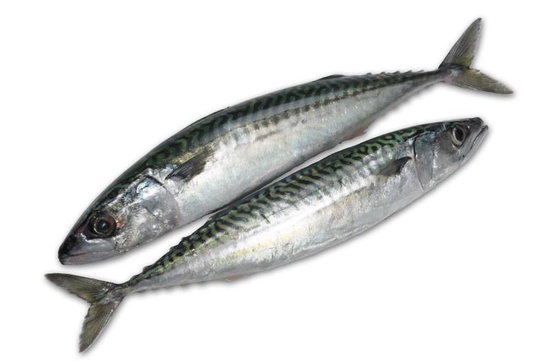 Fresh Mackerel 1lb