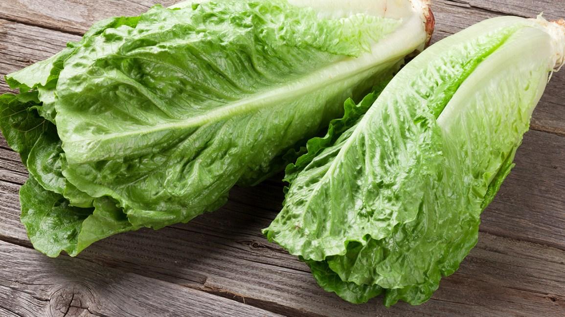 Lettuce EA