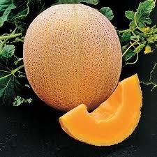 Melon Honeydew JUMBO EA