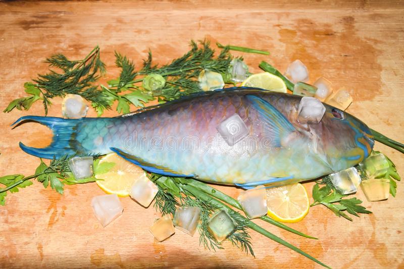 Parrot Fish 1lb